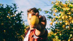 Zitronen enthalten viel Vitamin C und stärken somit dein Immunsystem